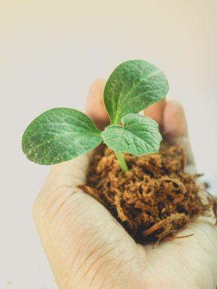 dirt-gardening-grow-1214405